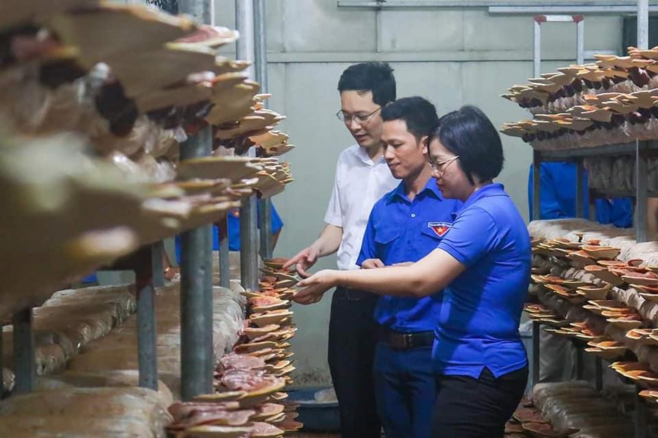 Người thanh niên làm giàu từ nghề trồng và chế biến nấm