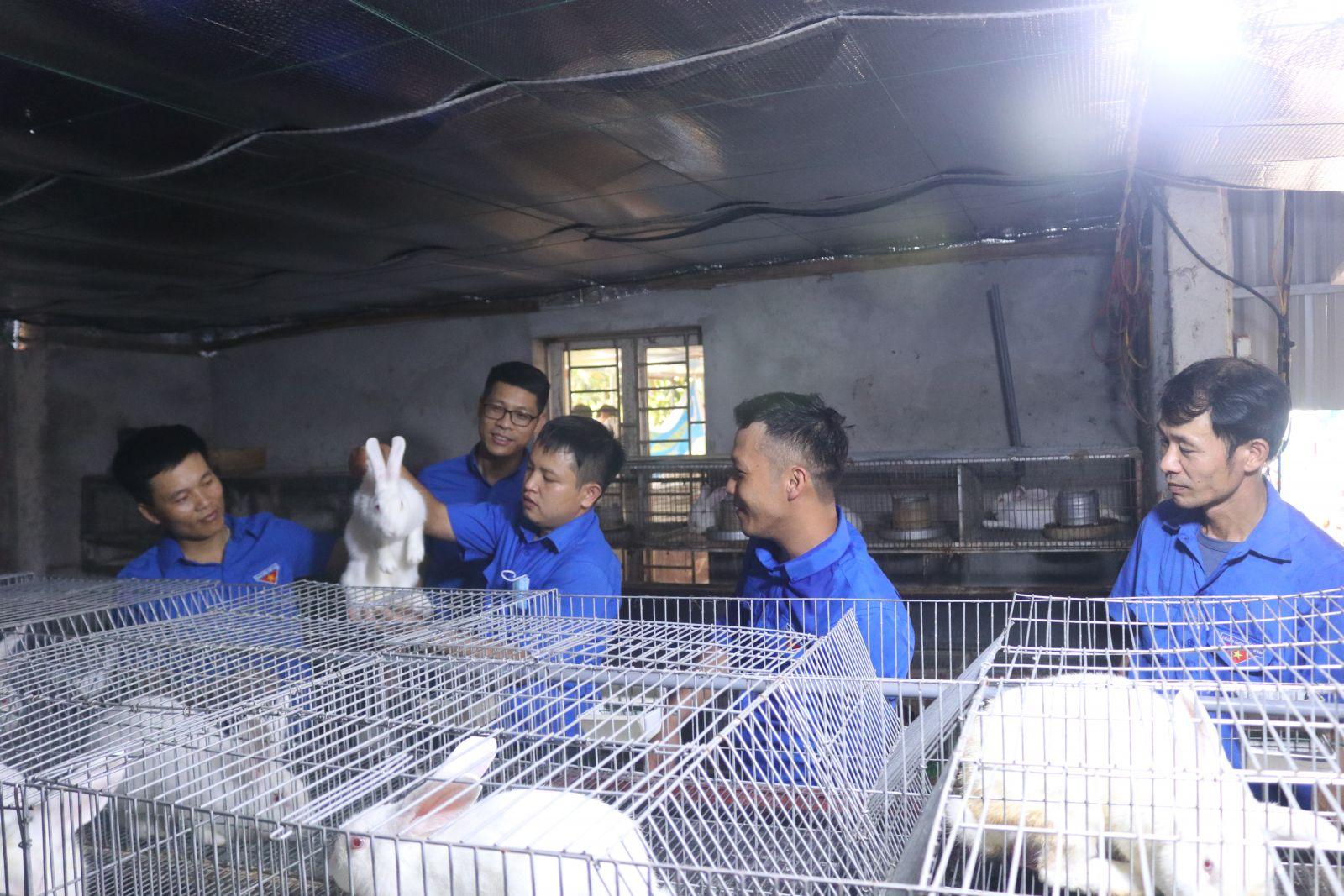 Đoàn viên, thanh niên Sở Nông nghiệp và Phát triển nông thôn tỉnh hướng dẫn quy trình thành lập Hợp tác xã Chăn nuôi thỏ