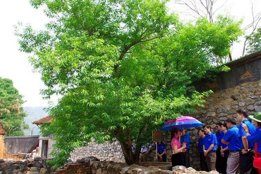 Kết quả hình ảnh cho nhà tù sơn la cây đào tô hiệu